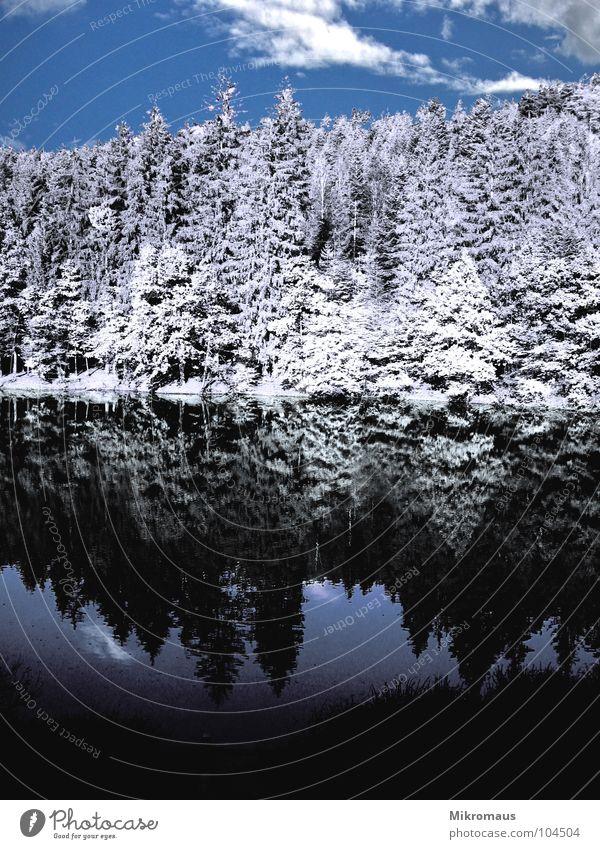 Märchenwald Wasser Himmel weiß Baum Meer blau Winter Wolken Wald kalt Schnee See Eis Küste nass Tanne