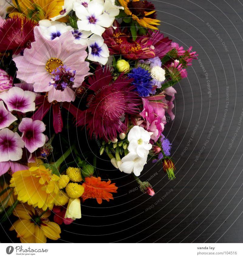 Blümchen mehrfarbig Außenaufnahme Detailaufnahme Textfreiraum rechts Hintergrund neutral Schwache Tiefenschärfe Freude Tisch Muttertag Geburtstag Frühling Blume