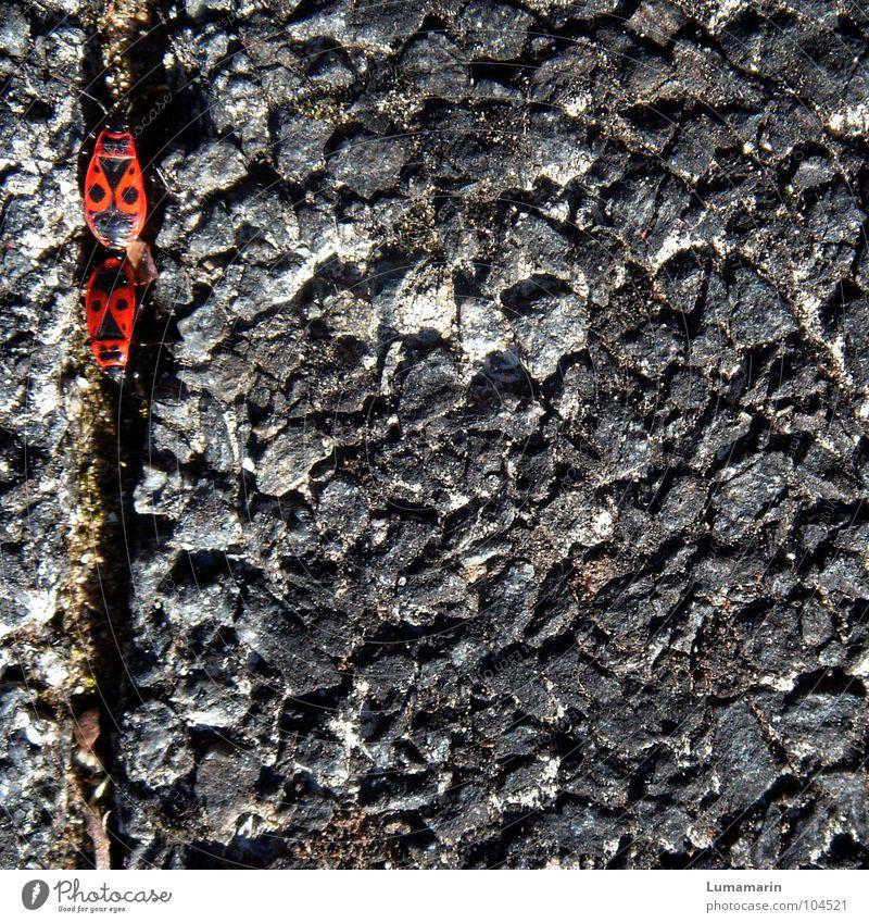 Abschleppen rot Sommer schwarz grau Stein Linie Tierpaar Verkehr leer Bodenbelag Verbindung Kopfsteinpflaster Partner Fuge Pflastersteine verbinden