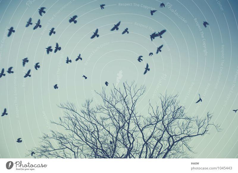 Irgendwas ist immer Umwelt Natur Tier Luft Himmel Wolkenloser Himmel Baum Wildtier Vogel Schwarm Bewegung fliegen fantastisch wild blau Stimmung Traurigkeit