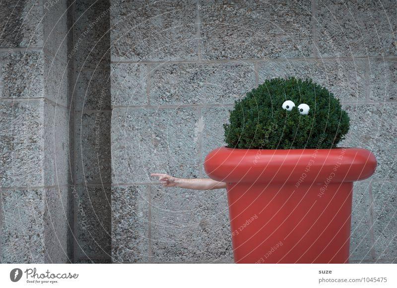 Spießig | verkleidet Lifestyle Freude Freizeit & Hobby Dekoration & Verzierung Auge Arme Hand Umwelt Natur Pflanze Sträucher Wachstum lustig nachhaltig verrückt