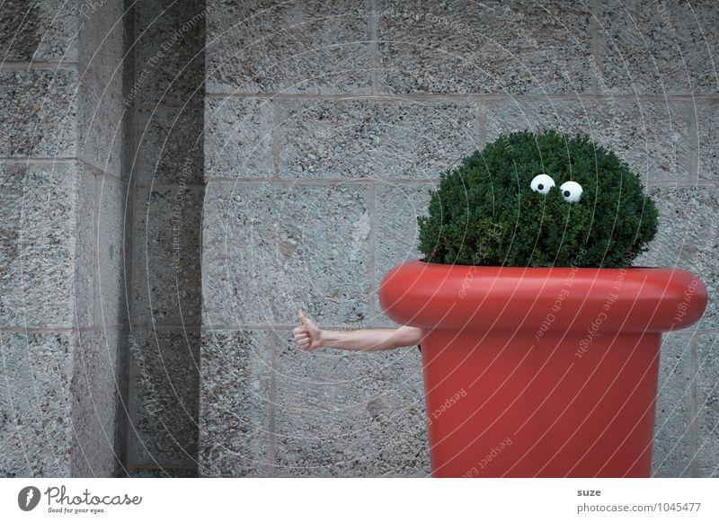 TippiToppi Lifestyle Freude Freizeit & Hobby Dekoration & Verzierung Auge Arme Hand Umwelt Natur Pflanze Sträucher Wachstum lustig nachhaltig verrückt grün rot