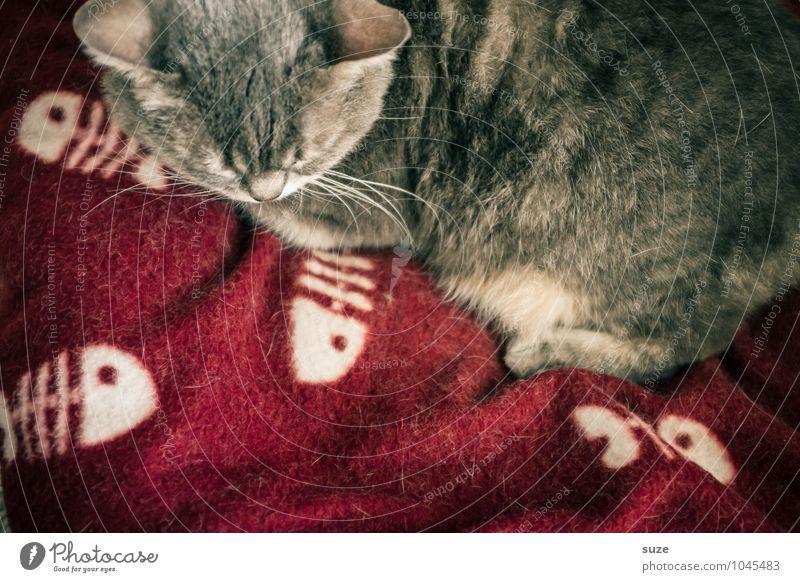 Dabei mag ich gar keinen Fisch Katze schön Erholung rot ruhig Tier Gefühle lustig grau Stimmung Freizeit & Hobby Zufriedenheit Häusliches Leben authentisch