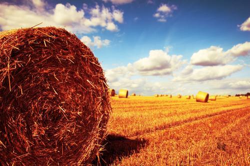 Hauptrolle Himmel Natur blau Sommer Landschaft Wolken Umwelt gelb Wärme Herbst Horizont Feld gold Klima Schönes Wetter Getreide