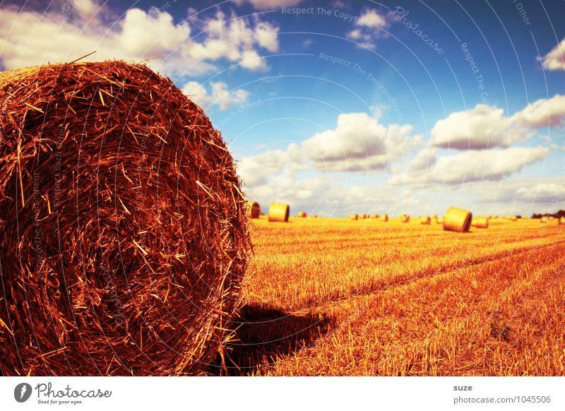 Hauptrolle Sommer Umwelt Natur Landschaft Himmel Wolken Klima Schönes Wetter Wärme Feld blau gelb gold Rolle Strohballen Ernte Kornfeld Landleben