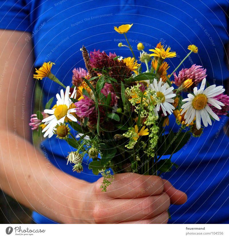 Für DICH! Blume Freude Wiese Geburtstag Geschenk Blumenstrauß Ernte Jubiläum geben Einladung Glückwünsche Muttertag Wiesenblume einladen