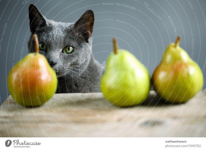 Katze und Birnen schön Tier gelb natürlich grau Lebensmittel leuchten Frucht elegant frisch warten Fröhlichkeit beobachten niedlich Neugier