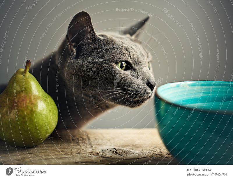 Katze und Birne blau schön Tier gelb natürlich lustig grau Lebensmittel Frucht elegant genießen beobachten niedlich berühren Neugier