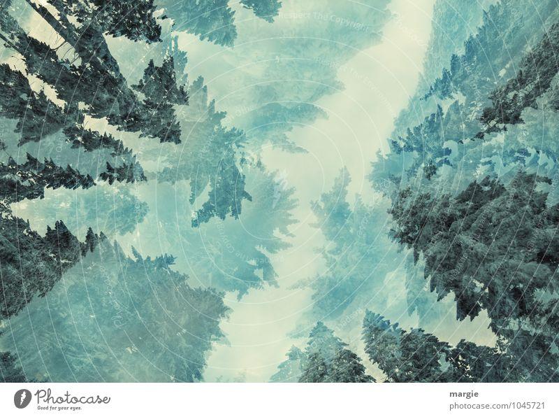 Durchblick in einen Winter- Traum- Wald Umwelt Natur Himmel Klima Klimawandel Wetter Schnee Baum Grünpflanze Fichte Tanne Tannennadel Wachstum fantastisch Ferne