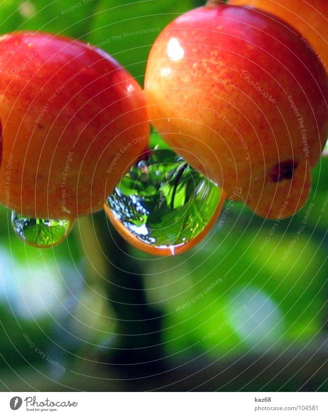 Tropfen rot gelb durchsichtig grün Morgen Baum Umwelt Reflexion & Spiegelung Kirsche Wassertropfen Bayern Hintergrundbild Lebensmittel Gesundheit Vitamin frisch