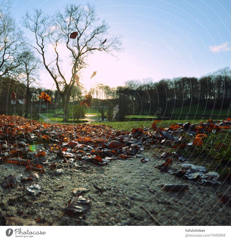 das war der herbst. Ferien & Urlaub & Reisen Ausflug Umwelt Natur Landschaft Pflanze Schönes Wetter Blatt Park Wärme Zufriedenheit Herbstlaub herbstlich fallen