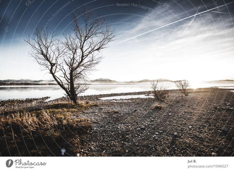 100! :) Umwelt Natur Landschaft Luft Wasser Himmel Winter Klima Wetter Schönes Wetter Baum Gefühle Stimmung authentisch Chiemsee Traunstein Bayern Farbfoto