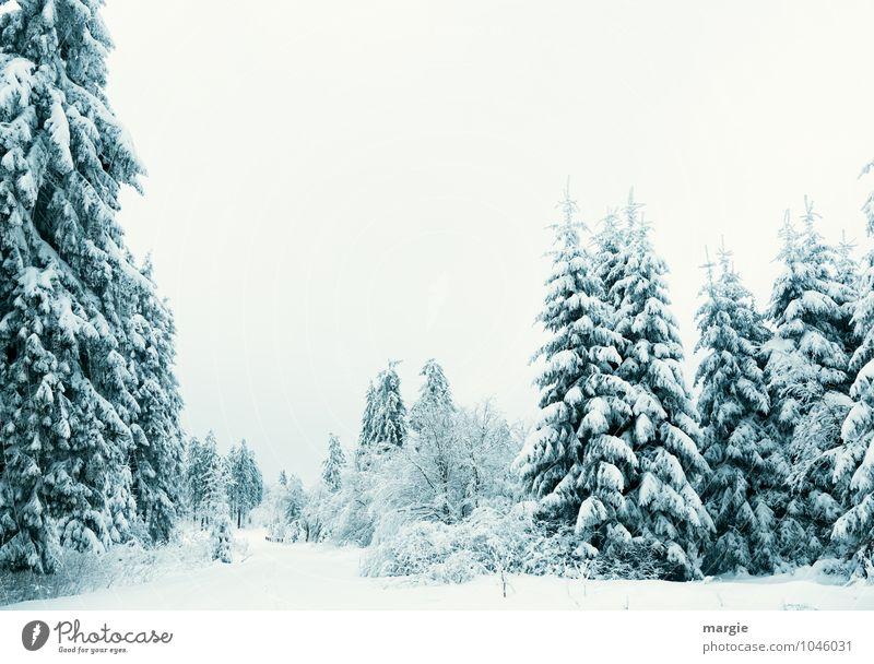 Winterfeeling, eine Schneelandschaft Umwelt Natur Landschaft Pflanze Tier Wasser Himmel Klima Eis Frost Schneefall Baum Grünpflanze Fichtenwald Tanne Nadelbaum