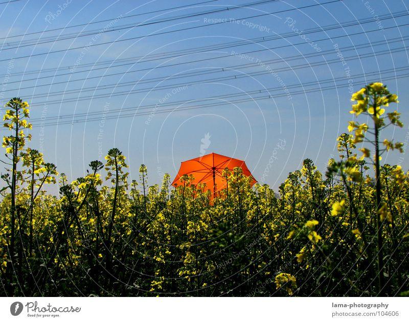 Ganz da hinten! Blume blau Pflanze Sommer Freude Ferien & Urlaub & Reisen ruhig Wolken gelb Farbe Erholung Wiese springen Blüte Frühling Freiheit