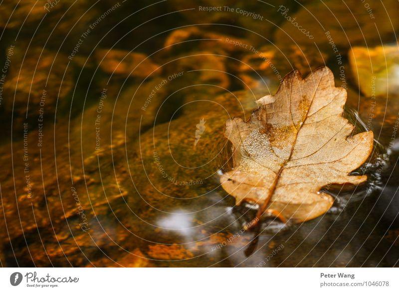 Herbst Floß Freiheit Natur Wasser Klima Pflanze Baum Blatt Grünpflanze Wald Bach Fluss Zahn der Zeit alt Schwimmen & Baden fallen verblüht kaputt nachhaltig