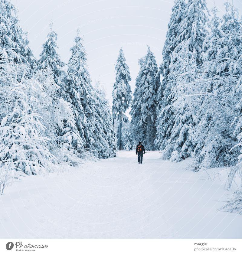 Winterurlaub Mensch Natur Ferien & Urlaub & Reisen Mann Baum ruhig Wald kalt Erwachsene Bewegung Schnee Wege & Pfade Gesundheit Schneefall maskulin