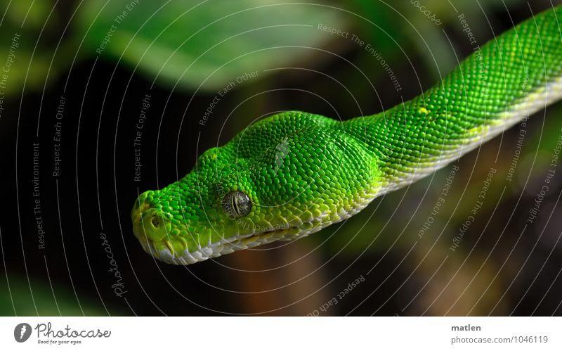 Freischwinger Pflanze grün weiß Tier braun Tiergesicht Schweben Schlange Schuppen