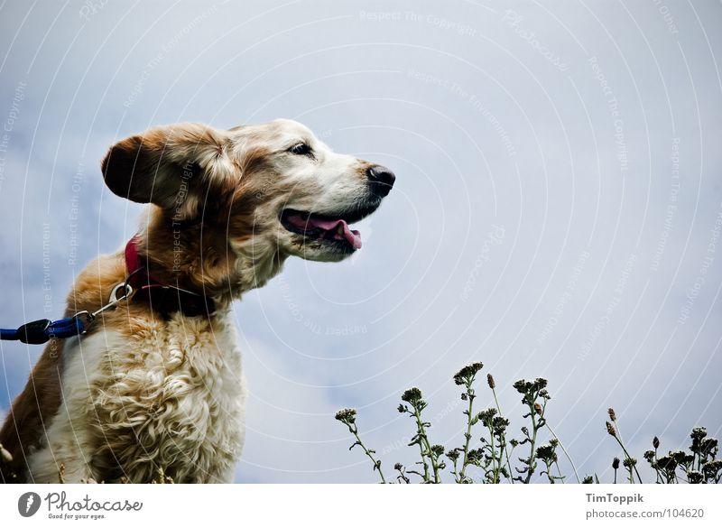 Ohren im Sturm Hund Fell Hundeschnauze Schnauze atmen Terrier Windgeschwindigkeit Leidenschaft Küste Tier Säugetier Wetter Hundeleine Seil Pflanze Himmel Zunge