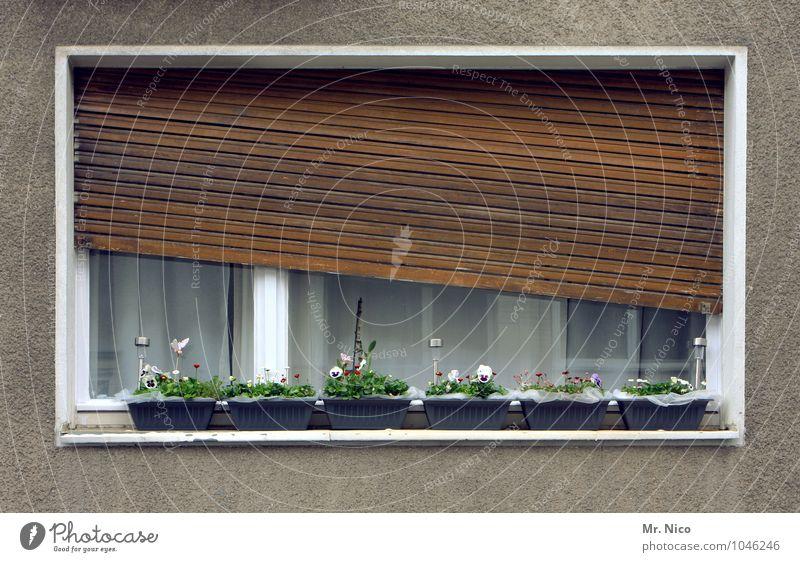 schieflage reloaded Häusliches Leben Wohnung Haus Dekoration & Verzierung Pflanze Blume Stadt Gebäude Architektur Fassade Fenster Neigung Rollladen Fensterbrett