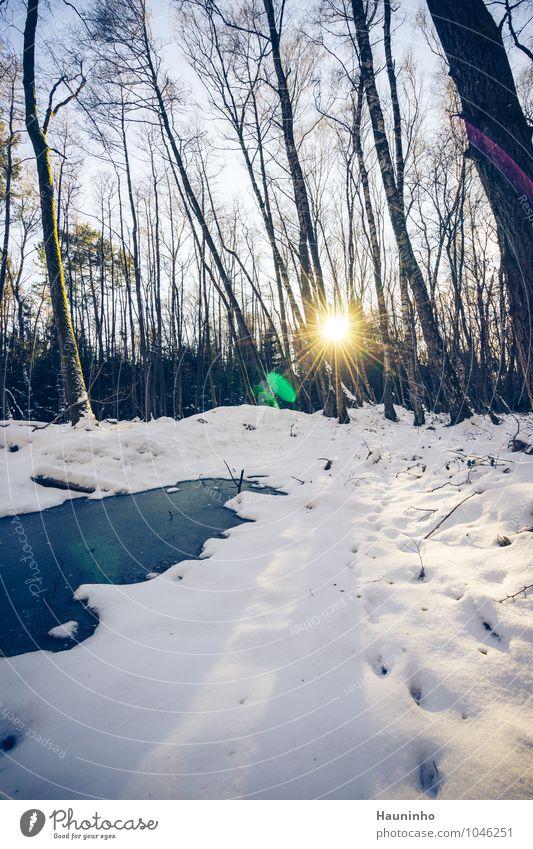 Winterwald Umwelt Natur Landschaft Luft Himmel Sonnenaufgang Sonnenuntergang Sonnenlicht Wetter Schönes Wetter Eis Frost Schnee Pflanze Baum Sträucher