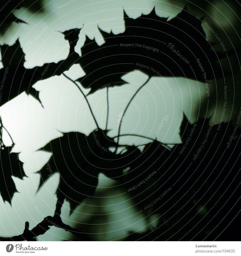 evening leaves (I) grün Baum Sommer Blatt schwarz ruhig dunkel Herbst grau Garten Traurigkeit träumen schlafen Vergänglichkeit Trauer Jahreszeiten
