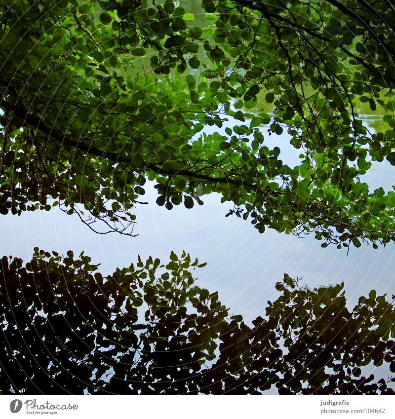 Gegensätzlich einheitlich Baum Reflexion & Spiegelung Blatt Teich See Wasseroberfläche 2 grün grau Umwelt Pflanze Ast Doppelbelichtung Natur