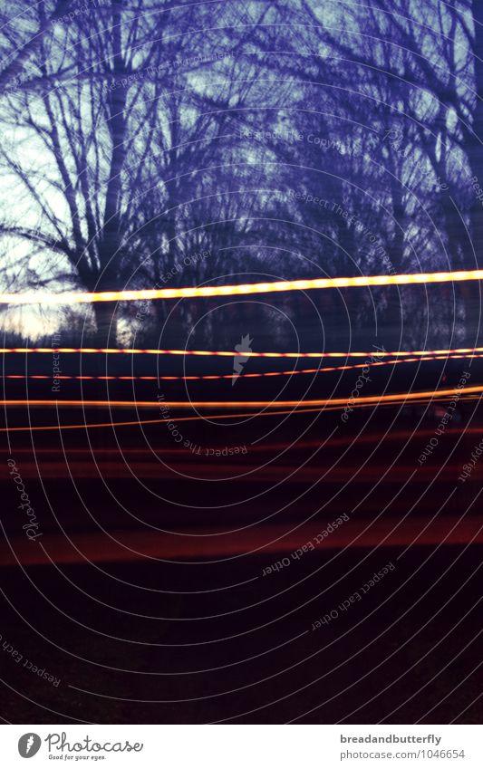 experimentell Winter Baum Park Bewegung blau Perspektive Farbfoto Außenaufnahme Experiment Menschenleer Textfreiraum unten Dämmerung Langzeitbelichtung