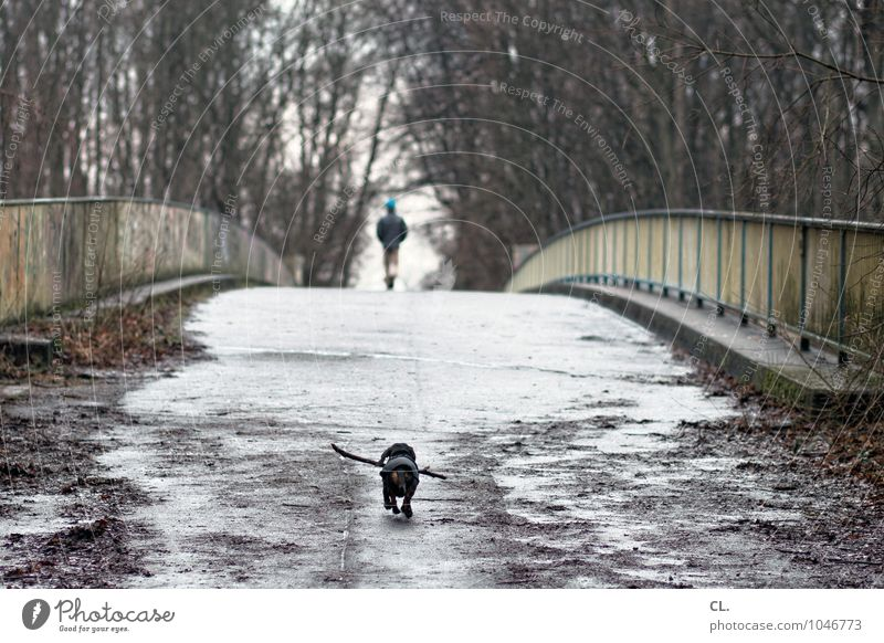 hachiko Hund Mensch Natur Baum Landschaft Tier Winter Wald Umwelt Leben Herbst Wege & Pfade Wetter Zukunft Brücke Ziel