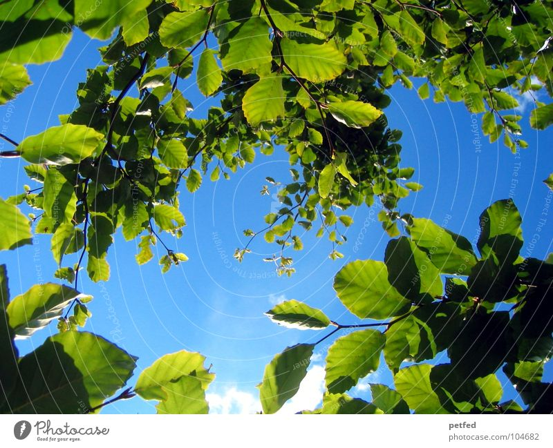 Im Garten Eden VIII Himmel Natur blau grün Sommer Baum Blatt Wolken Freude gelb Frühling Wetter Ast Baumstamm Gott