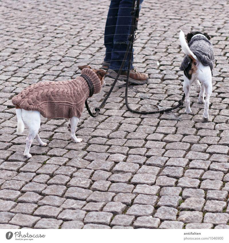 KÖ-ter Hund Tier grau braun Lifestyle Freizeit & Hobby Bekleidung Warmherzigkeit Spaziergang trendy Jeanshose Haustier Kopfsteinpflaster