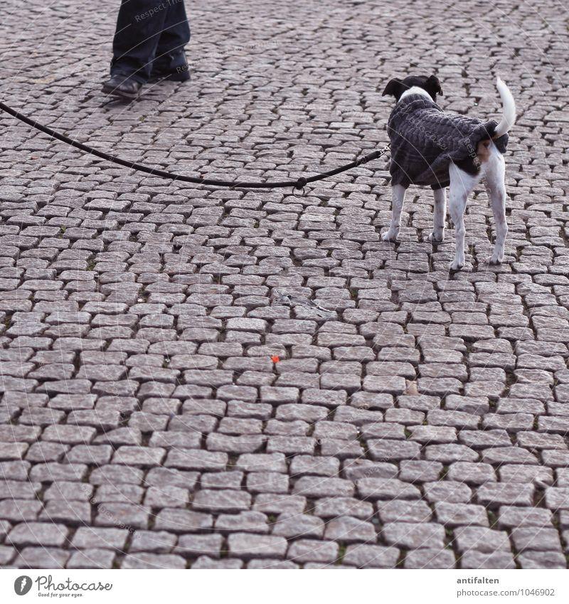Treue Freunde maskulin Mann Erwachsene Beine Fuß 1 Mensch 30-45 Jahre Stadt Altstadt Platz Marktplatz Kopfsteinpflaster Hose Pullover Strickjacke gestrickt