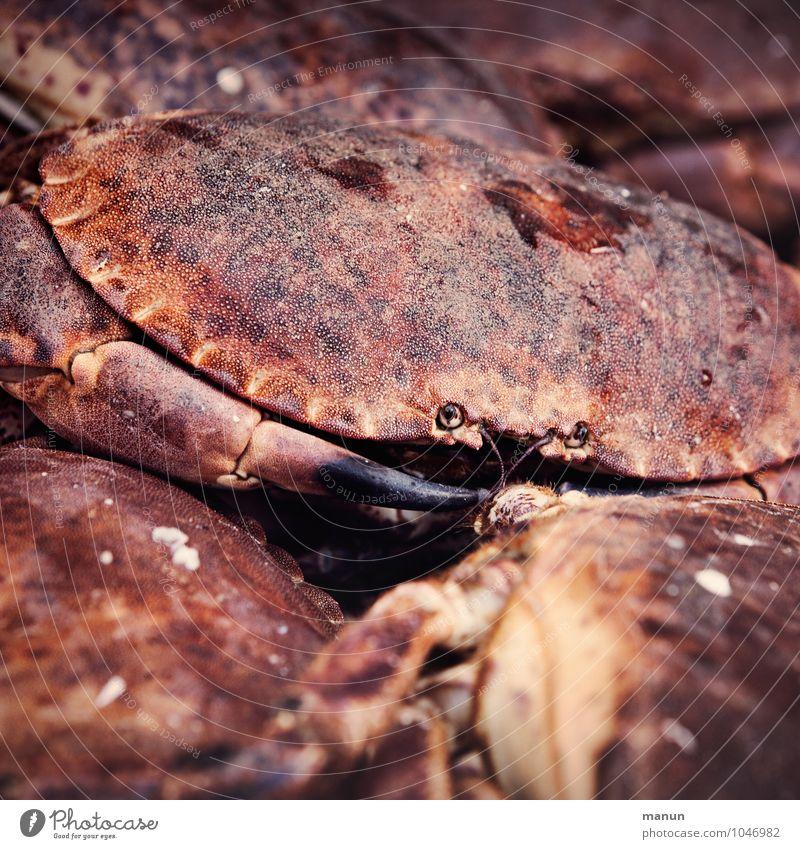 guckst du Natur Tier Gesundheit Lebensmittel Wildtier frisch Ernährung rein lecker Bioprodukte Umweltschutz nachhaltig Schere Krebstier Meeresfrüchte Krabbe