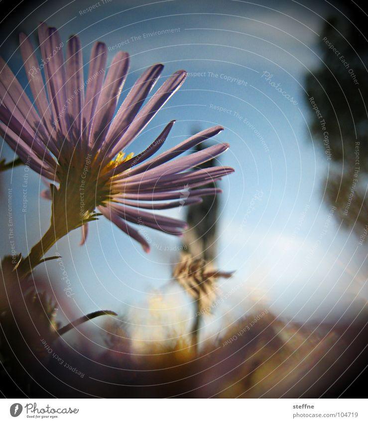 blümsche Blume Blüte Gegenlicht violett schwarz Sonne Himmel blau