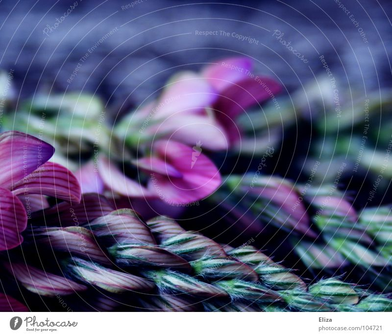 Purple Minds Natur Pflanze blau schön Blume Erholung ruhig Winter dunkel kalt Traurigkeit Blüte Herbst Frühling Feld frisch