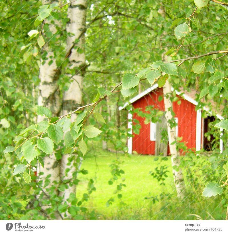 suomi 07 Natur grün Pflanze Sommer Baum rot Blatt Wald Wiese Gras Idylle Ast Rasen Hütte Zweig Skandinavien