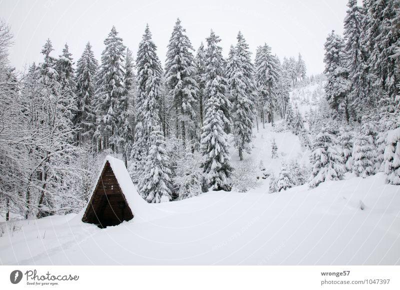 Winterwald Natur Landschaft Schnee Baum Nadelwald Nadelbaum Fichtenwald Wald Berge u. Gebirge Nationalpark Harz weiß Schneefall Schneelandschaft Waldlichtung