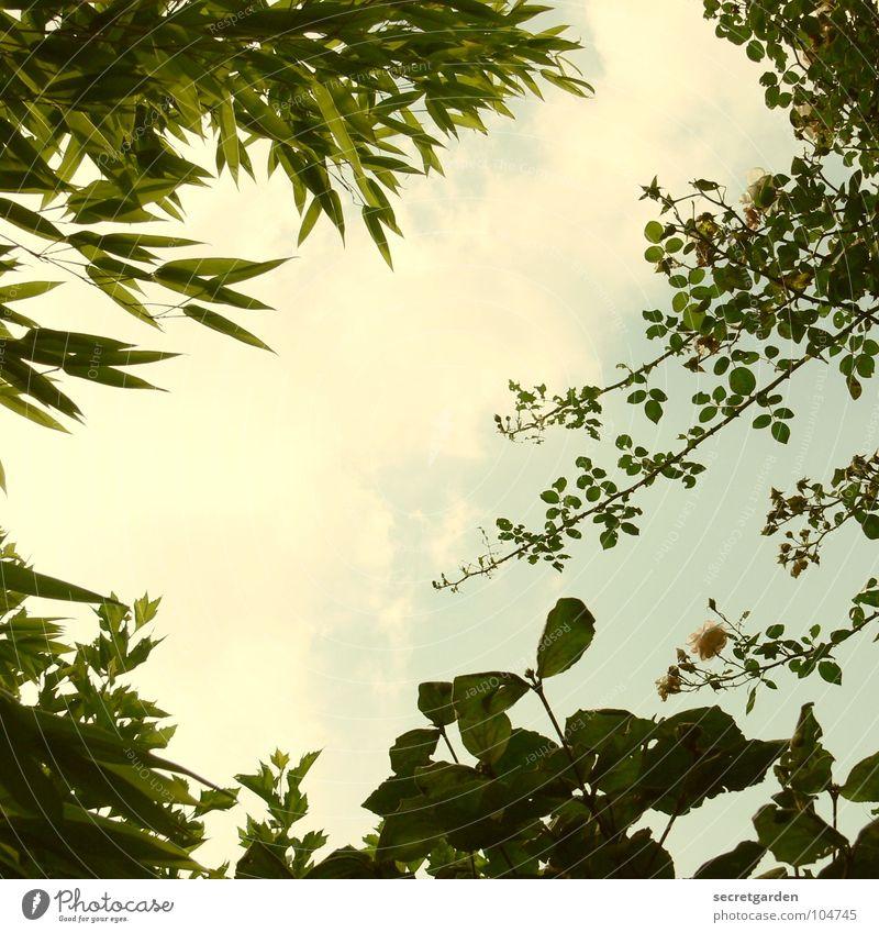 blick durch Natur Himmel Sonne grün Sommer Blatt Wolken Garten Park liegen Bambusrohr zurückziehen