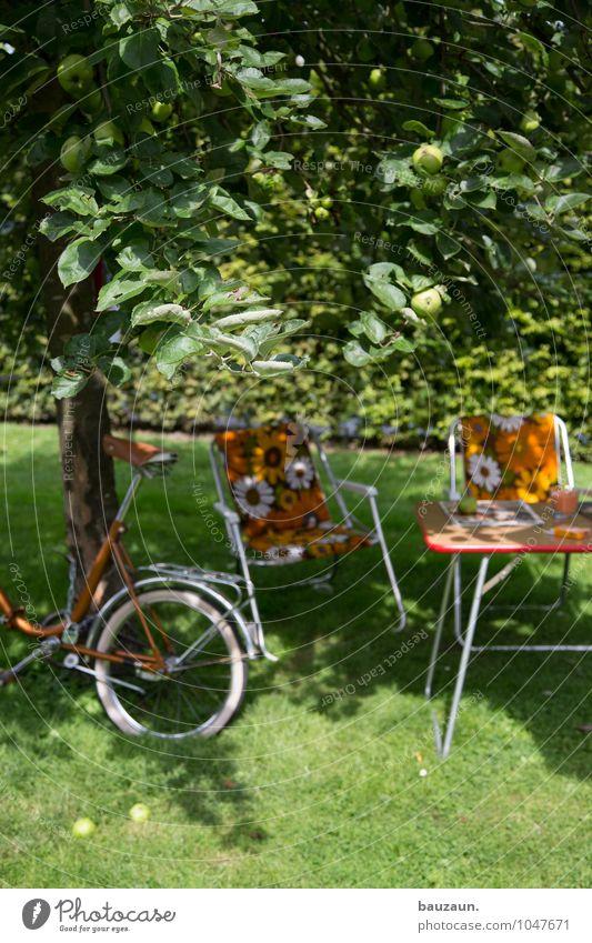schatten. Natur Ferien & Urlaub & Reisen Pflanze Sommer Baum Erholung Landschaft Freude Umwelt Wiese Gras Garten Park Freizeit & Hobby Erde Tourismus