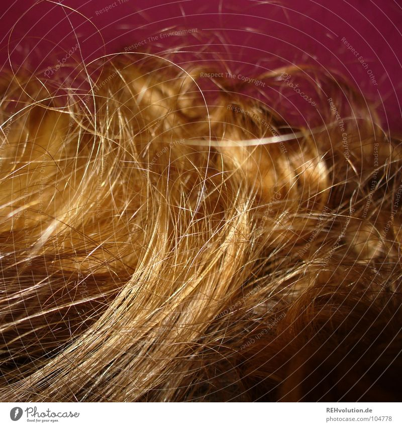 Zauberlöckchen-2 krause Haare zerzaust Physik Haare & Frisuren Wellen blond langhaarig gewaschen Friseur Schwimmbad Haarschnitt Bad Haarschopf trocken