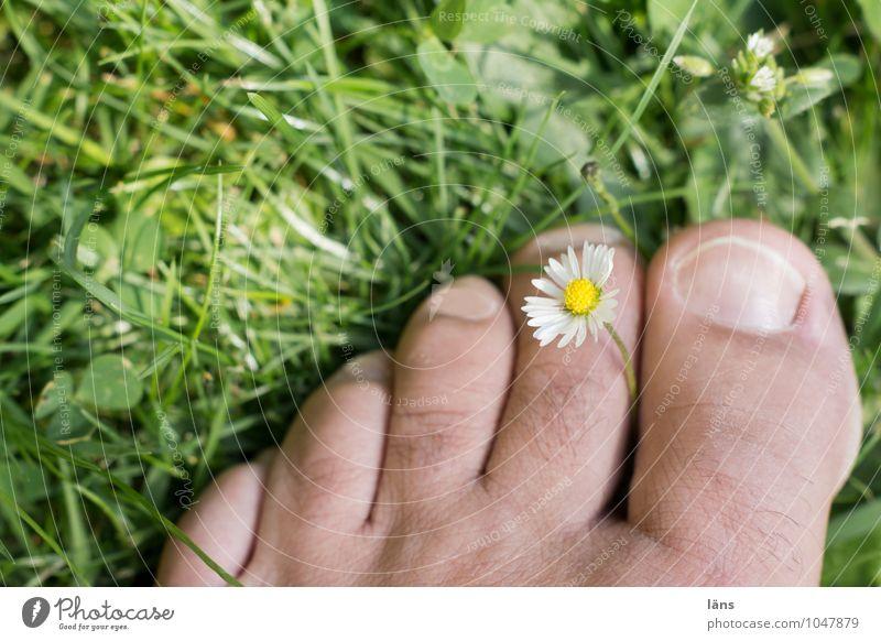 das Glück der Erde Mensch Natur Ferien & Urlaub & Reisen Mann Pflanze Sommer Erholung ruhig Erwachsene Leben Wiese Gras Fuß Gesundheitswesen maskulin