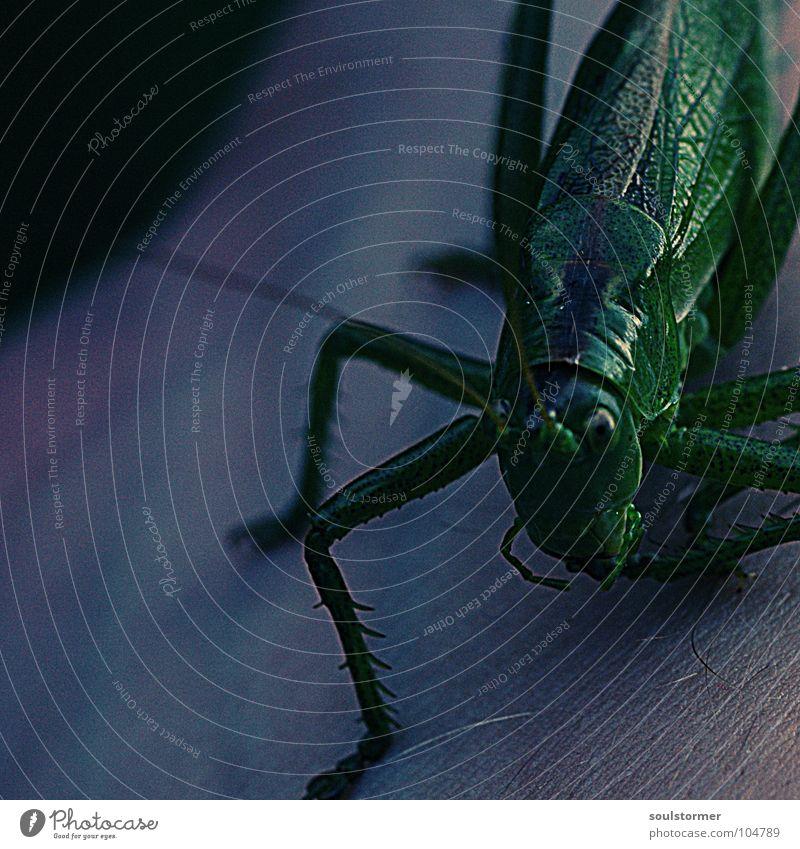 Jump II Hand grün schwarz dunkel grau Beine klein sitzen Finger Trauer Insekt festhalten Verzweiflung Tiefenschärfe Fühler krabbeln