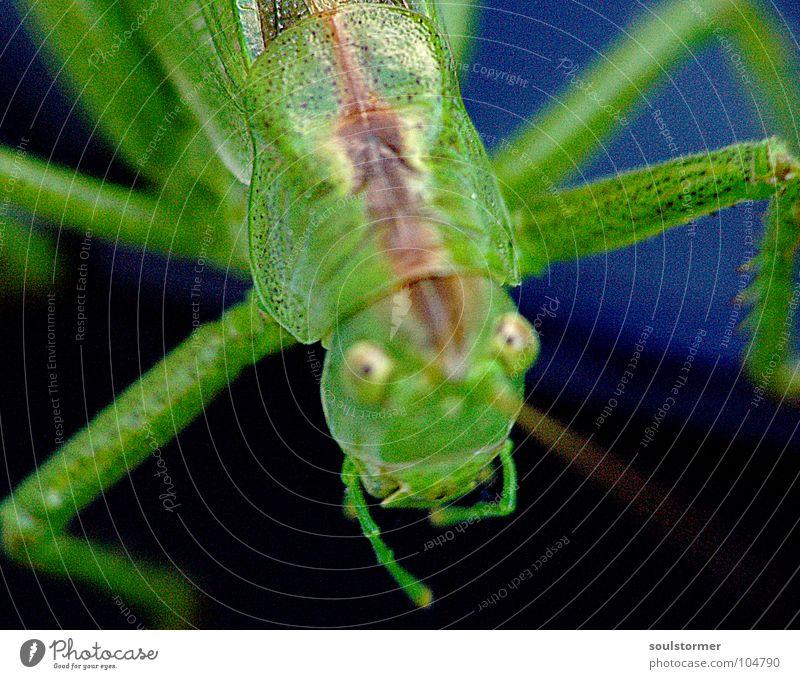 Jump III Grünstich Gelbstich Insekt Fühler grün Hand krabbeln Unschärfe Tiefenschärfe Finger schwarz dunkel grau festhalten obskur Makroaufnahme Nahaufnahme