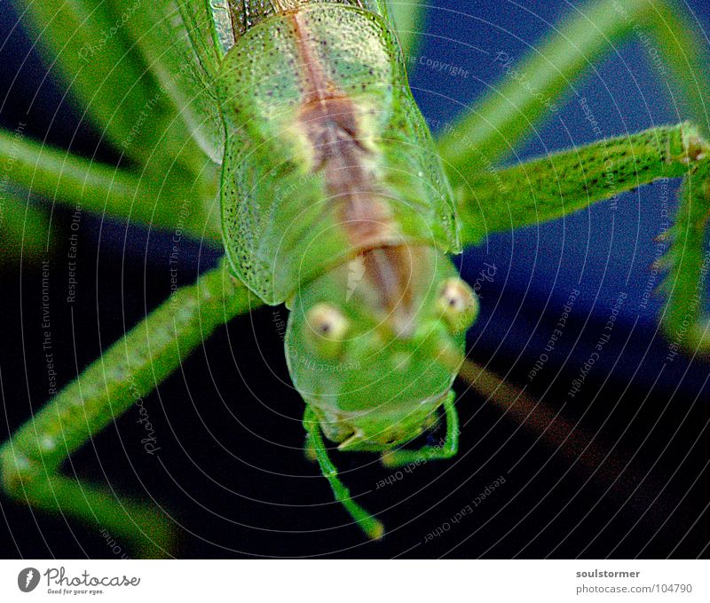 Jump III Hand grün schwarz dunkel grau Beine klein sitzen Finger Insekt festhalten obskur Tiefenschärfe Fühler krabbeln Heuschrecke