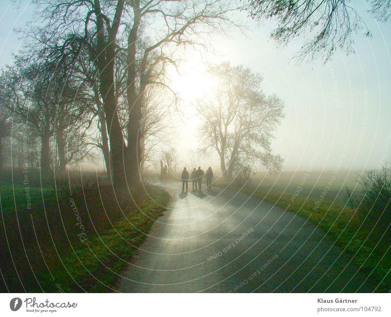 Spaziergang im Dezember Winter Luft Feld Nebel Spaziergang Allee