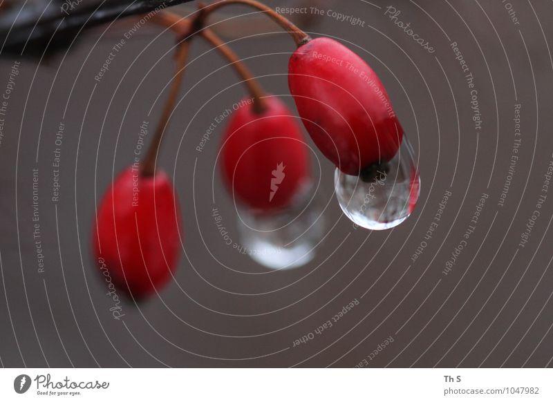 Regen Natur Pflanze schön ruhig Winter Herbst Gefühle natürlich Stimmung elegant authentisch ästhetisch nass einfach einzigartig