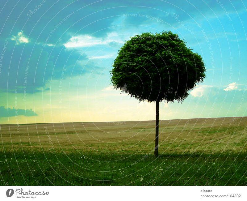 stille Himmel Natur blau grün Sommer Baum Blume Einsamkeit Blatt ruhig Ferne Gefühle Wiese Gras natürlich Gesundheit