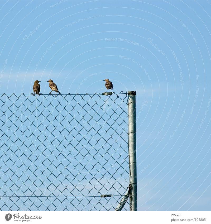 freundeskreis Natur Himmel blau Wolken Tier Erholung Freundschaft Zufriedenheit Vogel fliegen Seil sitzen mehrere Kabel einfach 4