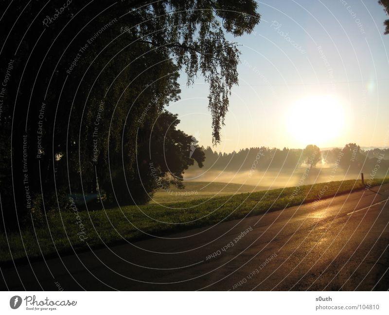 Morgendliches Nebelmeer I Himmel Sonne blau gelb Straße Wald kalt Wärme Beleuchtung Nebel Physik Schönes Wetter Erfrischung Nebelmeer