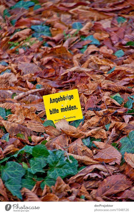 Bitte melde dich Natur Pflanze Blatt Landschaft Umwelt Traurigkeit Herbst Gefühle Tod Berlin Lifestyle Park Schilder & Markierungen Tourismus Hinweisschild