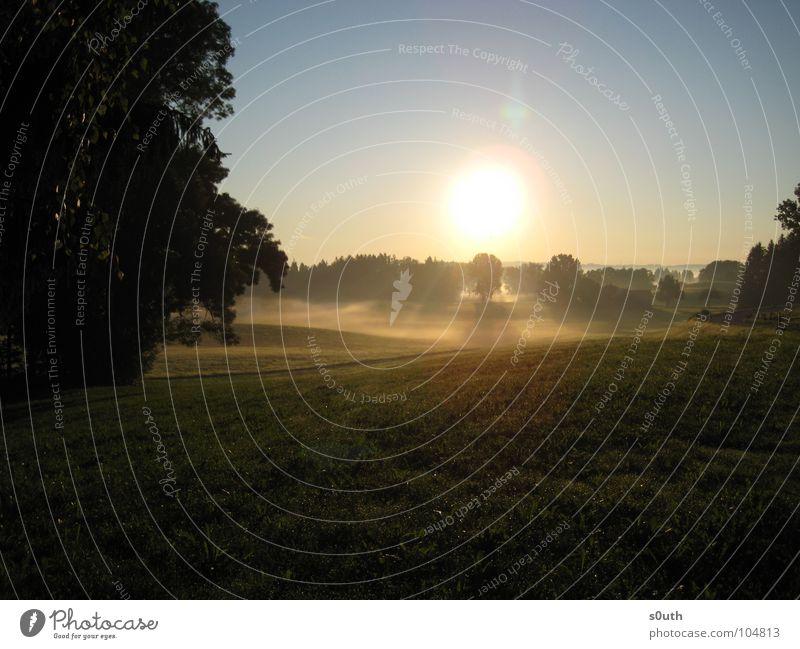Morgendliches Nebelmeer III Wald gelb Sonnenaufgang Physik kalt Straße Beleuchtung Himmel blau Wärme Schönes Wetter Erfrischung